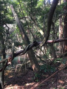 芸術的な木2