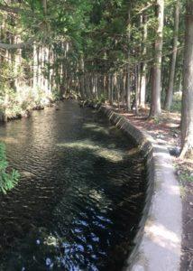 湧水の樹蔭路1