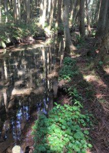 湧水の樹蔭路2
