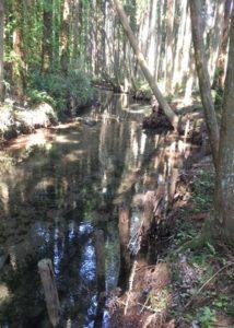 湧水の樹蔭路3