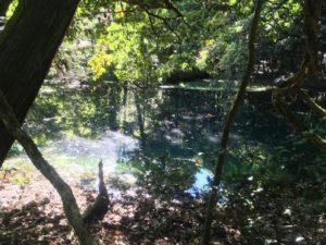 丸池様 落ち葉がたくさん