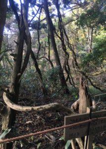 ヘビがからまっているように見える木