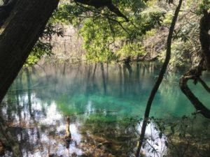 2019.2.24美しい緑色の丸池様