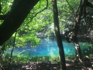 丸池様の池の中の倒木