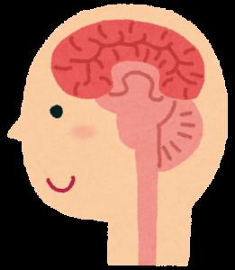活性化された脳内