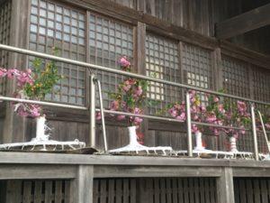 八重桜と山吹の花笠1