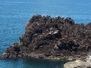 三崎海岸岩場