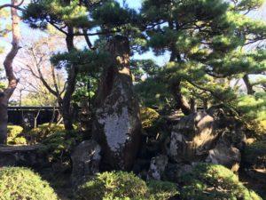 旧青山本邸のみごとな庭園